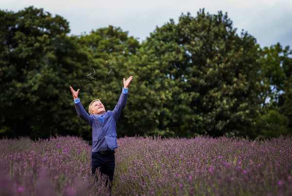 Page Boy playing in lavender fields at a wedding in Swettenham